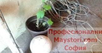 Почистване на двор и градина в София